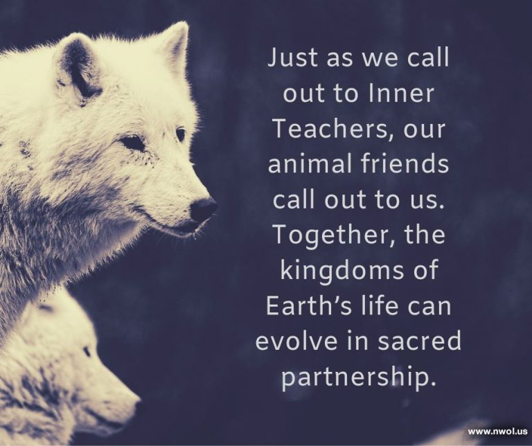 g-Animal-friends-call-to-us-sacred-partnership-1-249-F-768x644